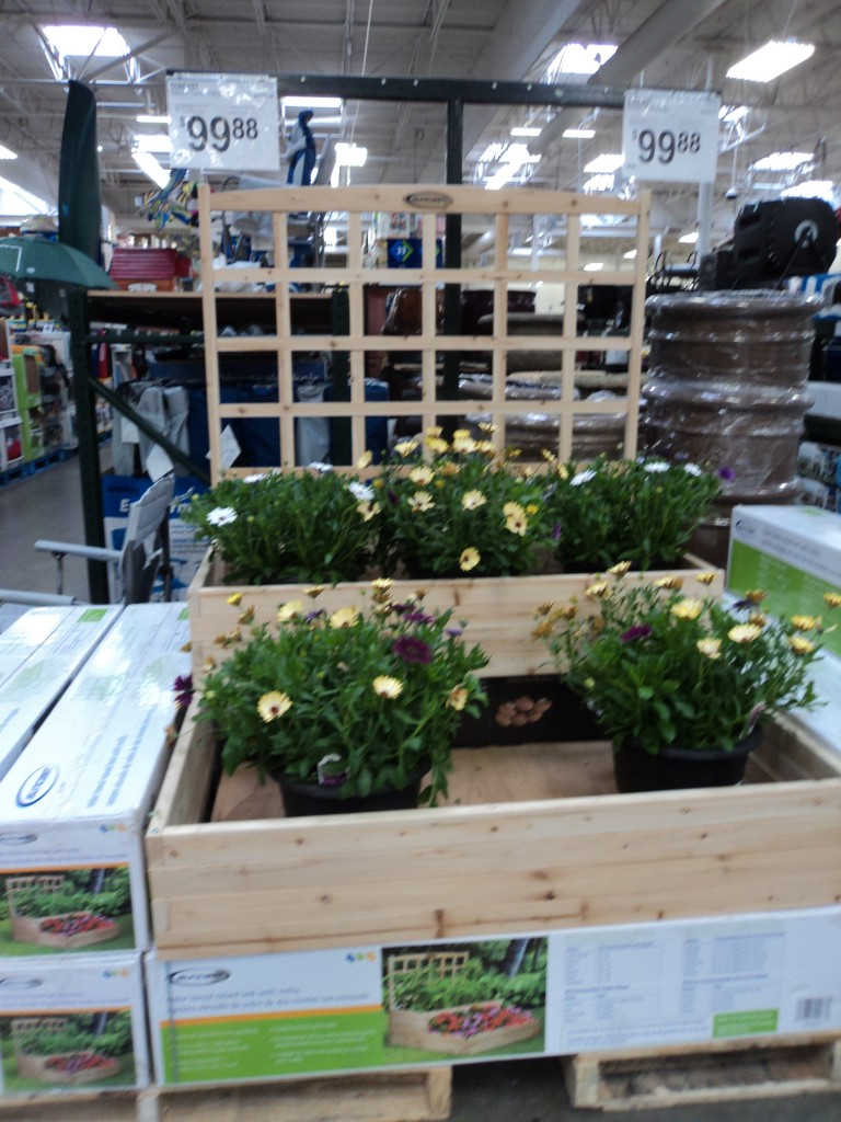 sam's club gardening plants