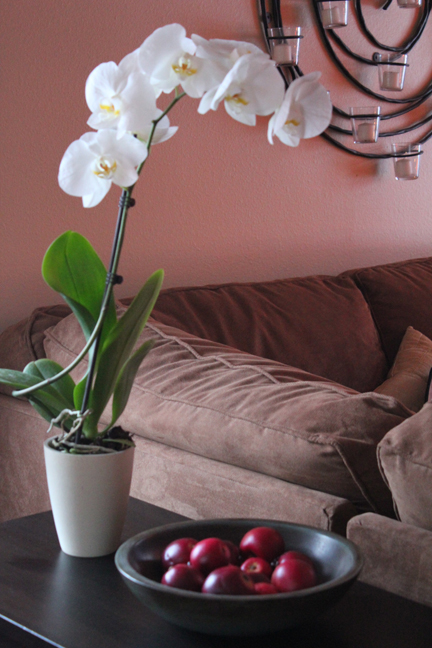 ALDI food store orchid